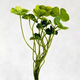 RP Kleeblätter 15 Blätter/ Bund