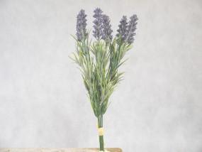 Lavendel mit 3 große Blüten