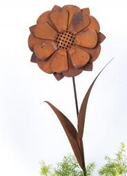 Sonnenblume z. Stecken gross