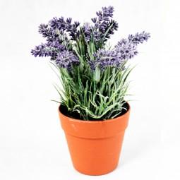 Lavendel i. rundem Topf natur 14 Blüten