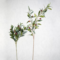 Olivenast kurz